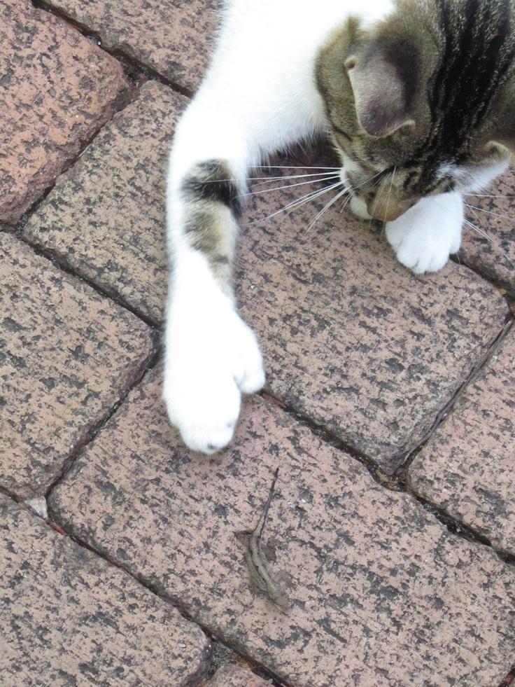 stampy cat costume
