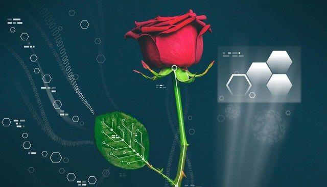 Eine Pflanze als elektrischer Energiespeicher – an diesem ungewöhnlichen Projekt arbeiten schwedische Forscher. Dabei nimmt die Pflanze – eine abgeschnittene Rose – einen leitfähigen un…