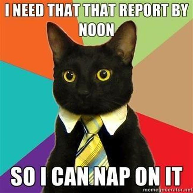 The Absolute Best of the Business Cat Meme | ViraLuck #funnymemes