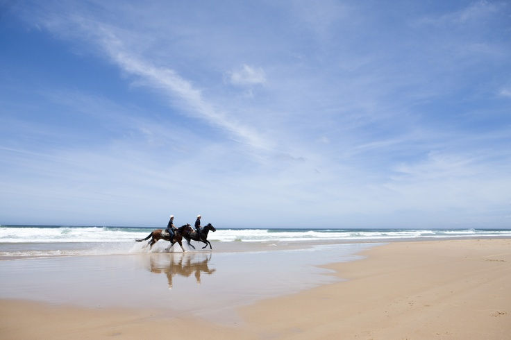 Horse riding in Port Stephens - choose the beach or the bush its all beautiful