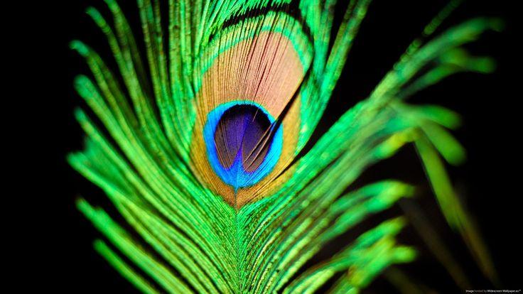 шляпа из павлиньих перьев: 6 тыс изображений найдено в Яндекс.Картинках