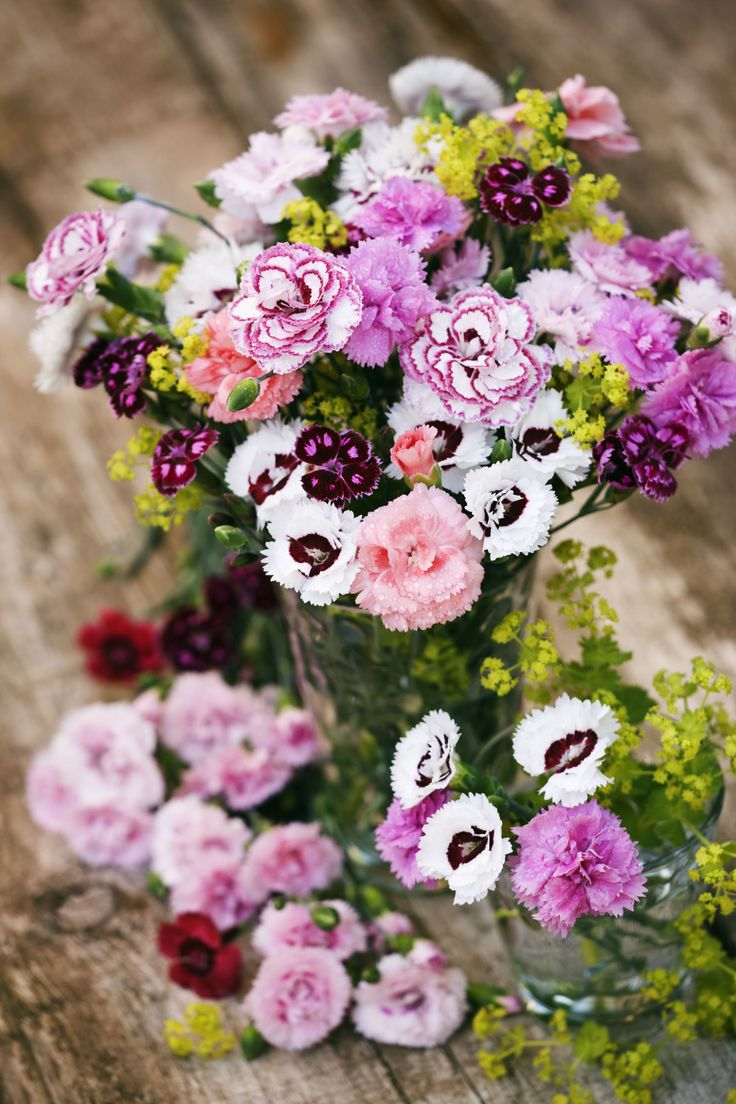 88 best tears blossom images on pinterest carnations pink 9 reasons carnations are actually the best reviewsmspy