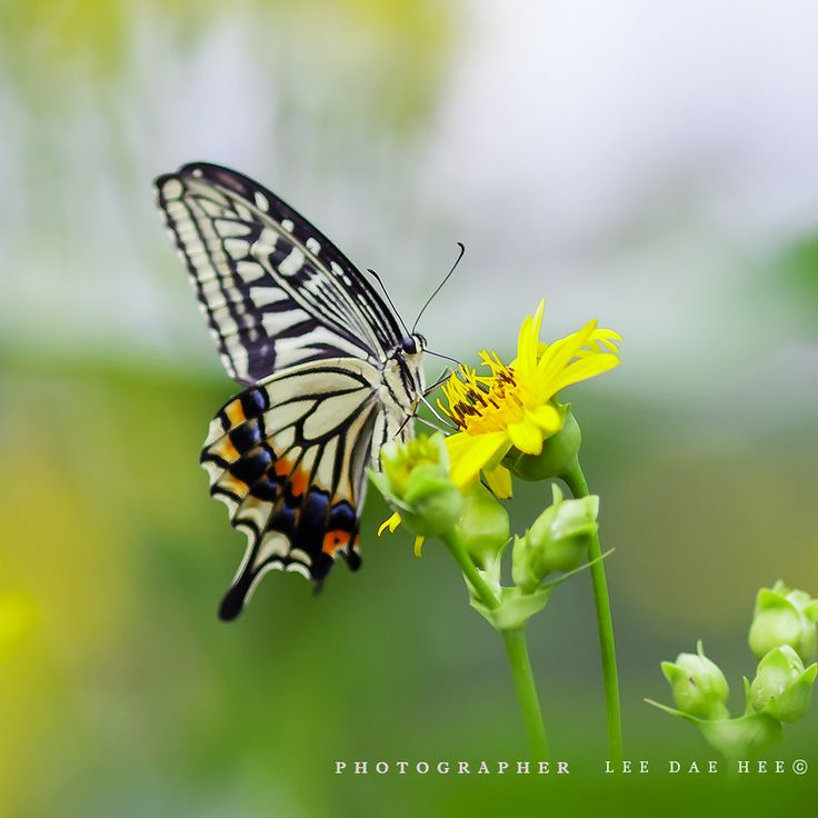 butterfly---- (3)......  또 다른 나비., by Daehee LEE on 500px