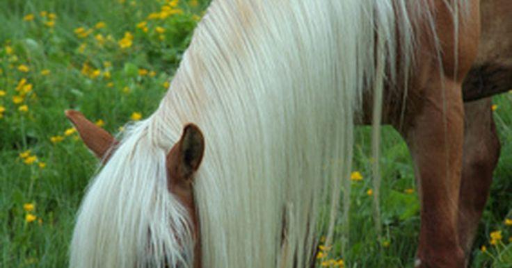 El hábitat natural de un caballo. Los espacios abiertos y una manta de césped es lo que los caballos prefieren tener a su alrededor. Aunque a menudo son asociados con establos como su espacio de vida y con la avena como su alimento, los caballos prefieren un tipo muy específico de medio ambiente basado en cómo se desarrollan.