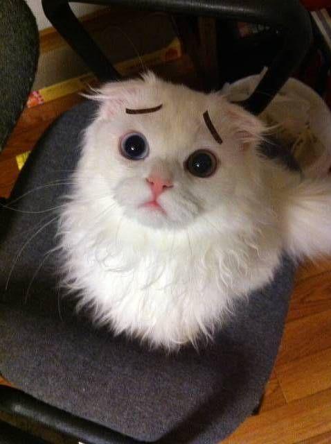 Really?すごい 困って, Sadness Cat, Scorsese Cat, Eyebrows Cat, Poor Kitty, Cat Eyebrows, Cat Ange, Skeer Kitty, Cat Brows
