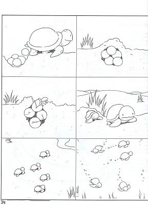 LIFE CYCLE OF A TURTLE | learningenglish-esl