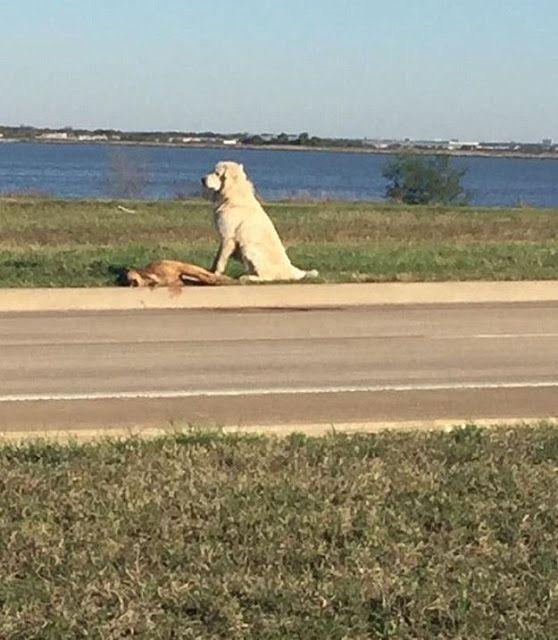Η συγκλονιστική φωτογραφία που συγκίνησε το διαδίκτυο: Ο σκύλος που αρνήθηκε να εγκαταλείψει τον πεθαμένο φίλο του