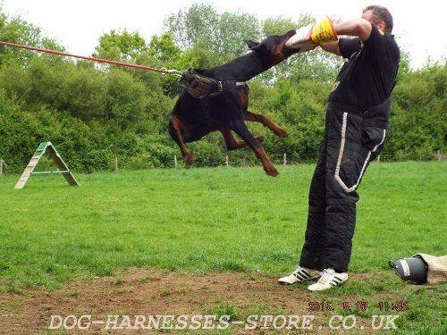 Doberman At Schutzhund Training Schutzhund Doberman