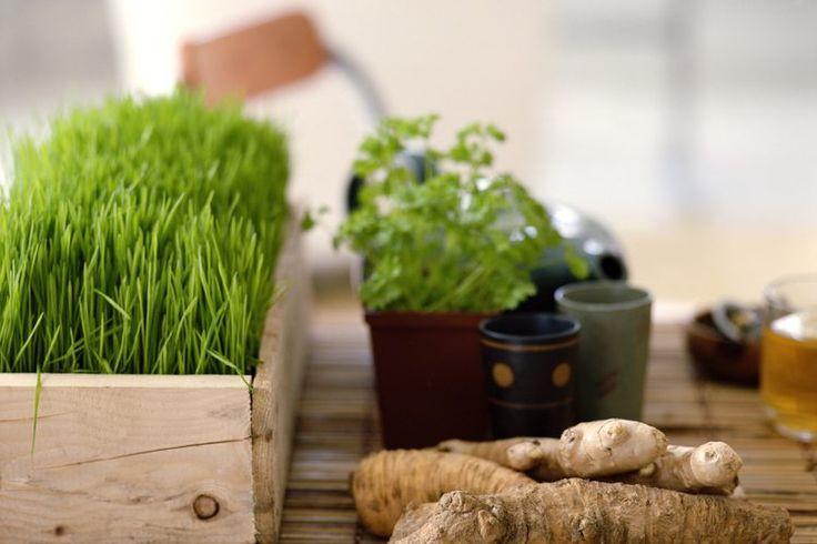 Desintoxicación con hierbas para la abstinencia de drogas | Muy Fitness