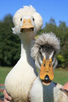 This type of duck can't be real?😆 but I hope so..
