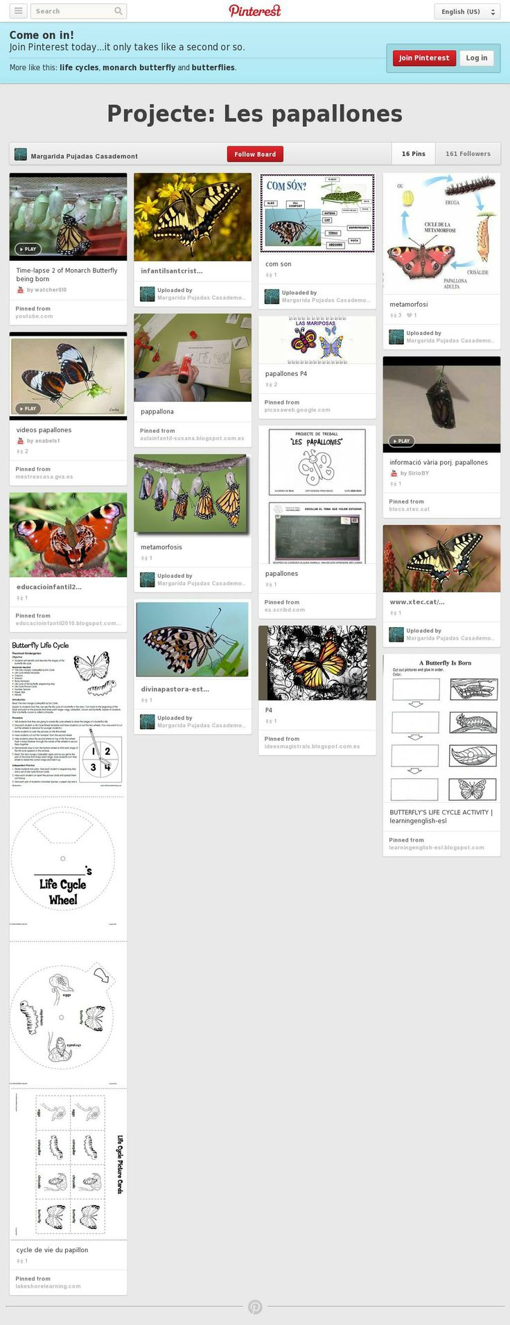 Projecte sobre LES PAPALLONES de Margarida Pujadas