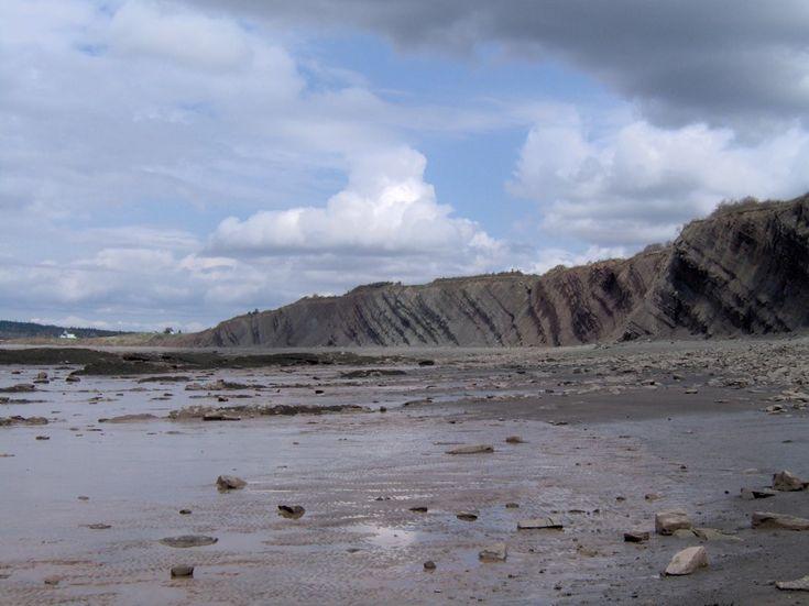La roca sedimentaria en Joggins, Nuevo Escocia.  Las capas están inclinadas casi 30 grados y son apiladas verticalmente más que un kilometro de profundidad.