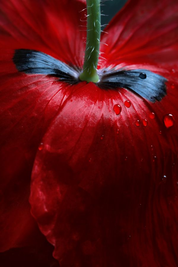 """© """"Red"""" by Mandy Disher"""