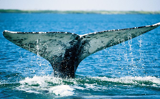 Whale watching is spectacular in Monterey Bay--California is one of the only places in the world where visitors can see whales year-round.