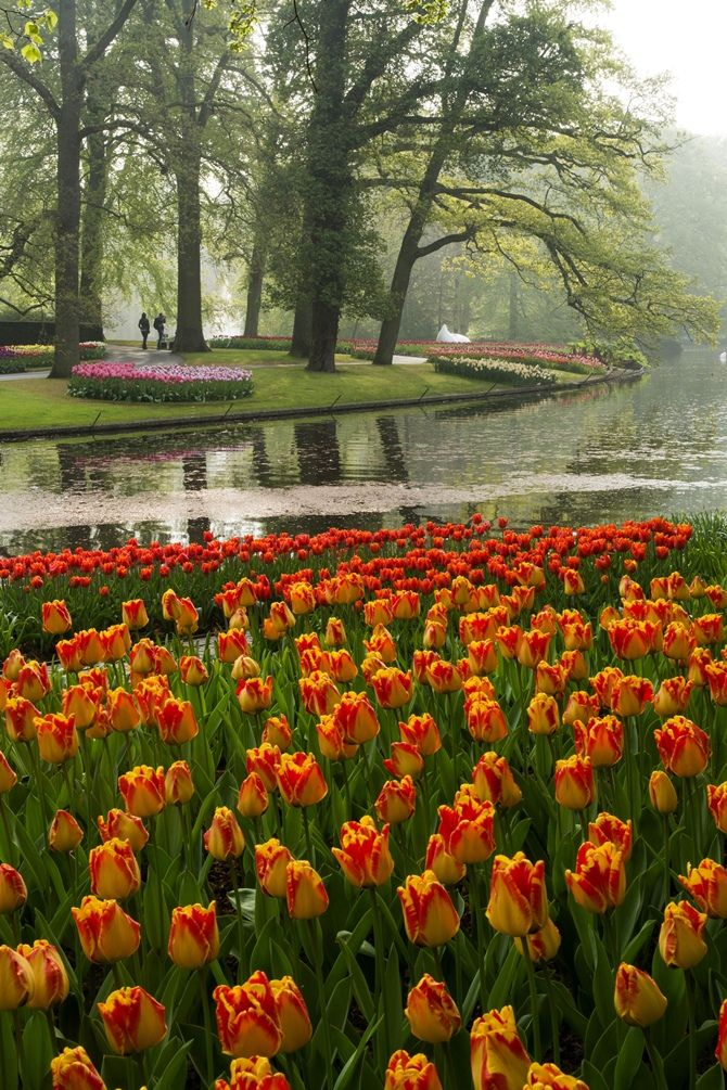 117 best KEUKENHOF GARDENS images on Pinterest Gardens