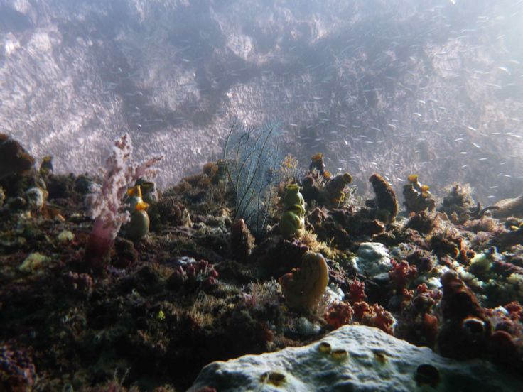 Wall with coral. Raja Ampat, Papua