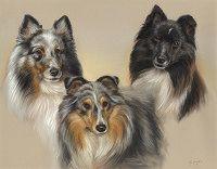 Honden portretten door Marjolein Kruijt