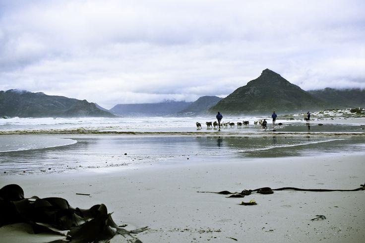 Mush it Up Husky sledding in Cape Town - Greenhairmermaid