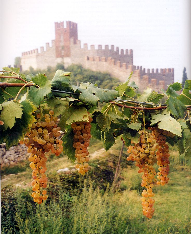 Soave, land of wine, Veneto region, province of Verona, Italy