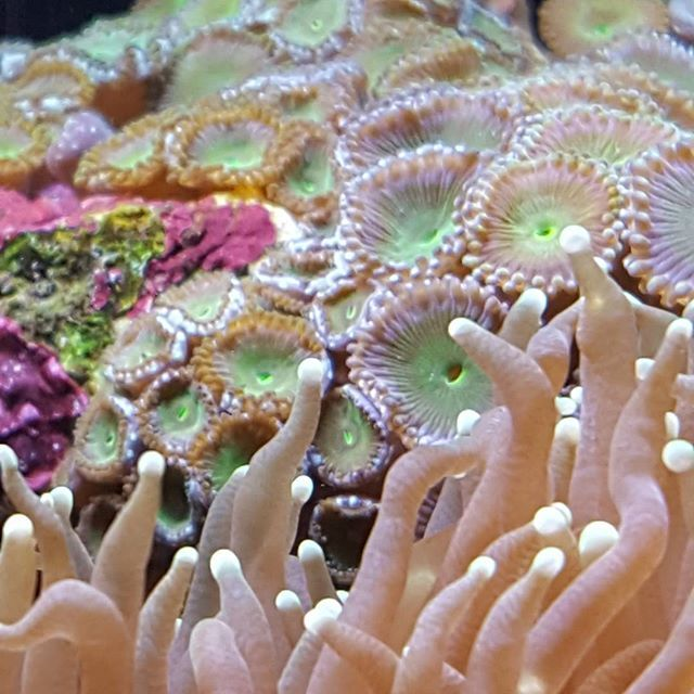 【sampei.9】さんのInstagramをピンしています。 《#アクアリウム #ネイチャーアクアリウム #水草水槽 #水槽 #ibrio #acquari #acquariologia #aquariums #piante #natura #pesci #zen #arredamento #layout #layouts #layoutdesign #roccia #roccie #moss #aquadesignamano #tropicalfish #fishofinstagram #nanotank #reefkeeper #nanoreef #saltwateraquarium #squali #acquariodigenova #acquariovillage #lovenature》