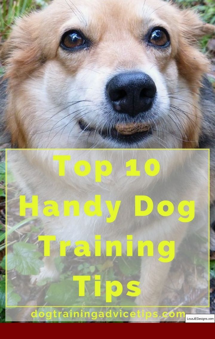 How To Train Your Dog To Stop Biting Leash And Pics Of Tips House