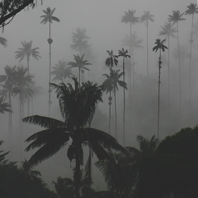 Mist Forest 004