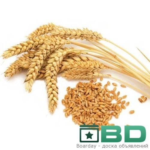 Пророщенная пшеница – одно из самых полезных для здоровья человека творений Природы. Высокая усвояемость организмом в сочетании с превосходными целительными свойствами делает пророщенные зер...