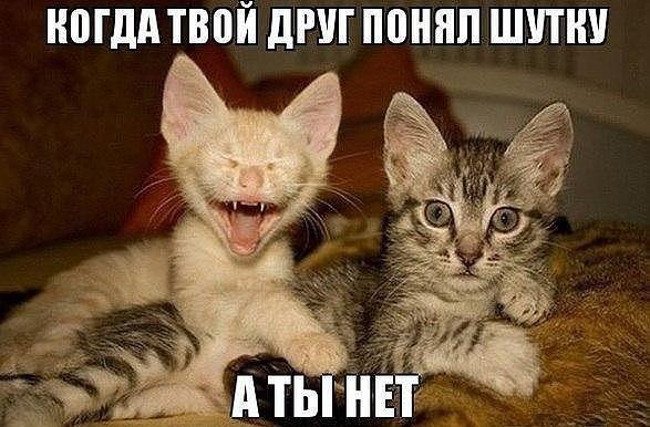 коты приколы - Поиск в Google