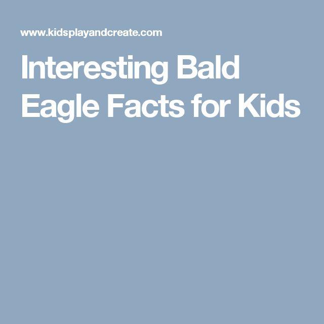 Interesting Bald Eagle Facts for Kids