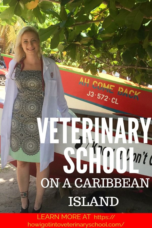 """Lauren applied to 8 veterinary schools and got accepted to 2, SGU and Ross. Lauren's advice is """"If I can get here, you can too."""" #SGU #vetstudent #dreamjob #vetmed #vetschool #caribbean #vettechlife #vet #college"""