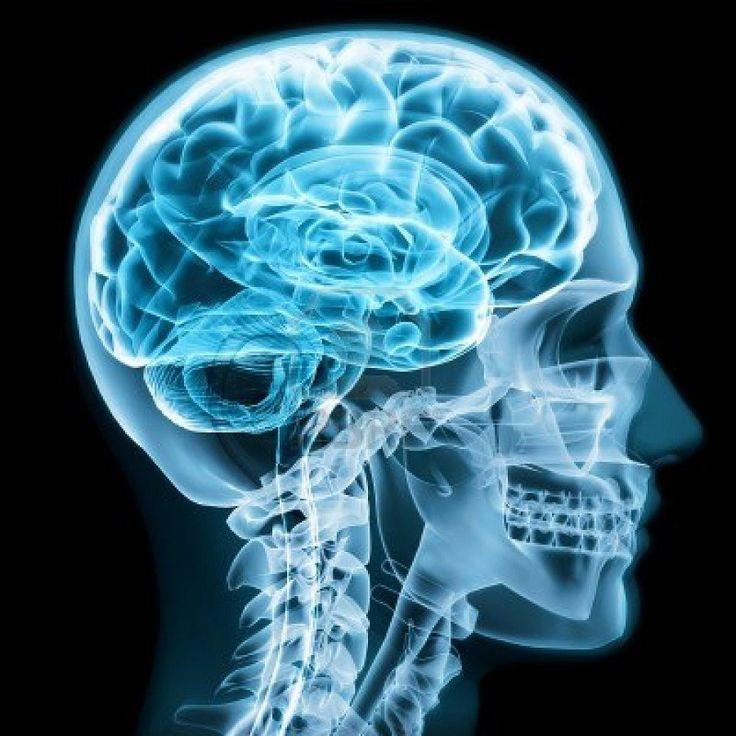 El cerebro es el órgano más misterioso y más estudiado del cuerpo humano.  Depositario de la conciencia y algunos dirían que hasta el alma. En este  ranking...
