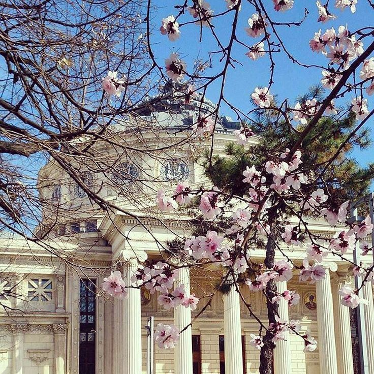 """Bucharest in Bloom   #myfavouritetimeofyear"""
