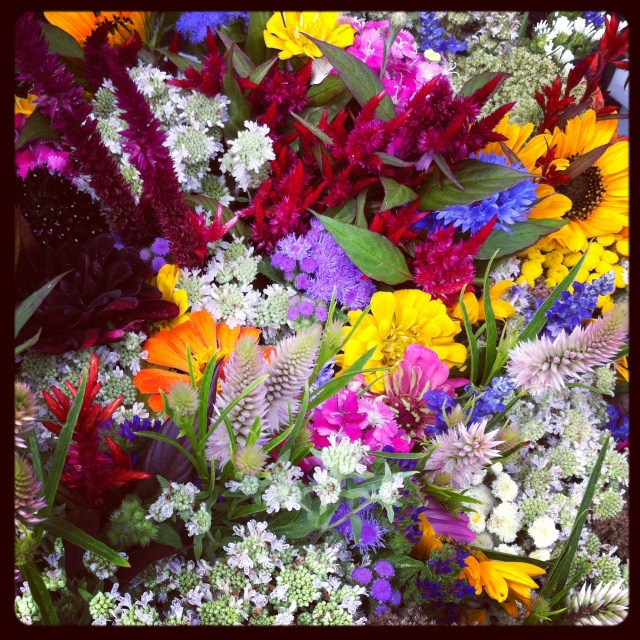 Wild flowers on a Sunday morning...