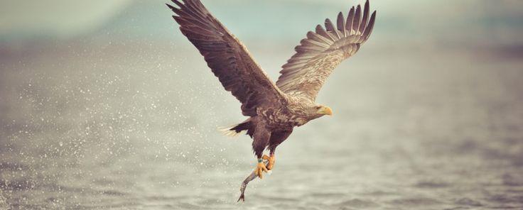 Adler-3-930x375.jpg (930×375)