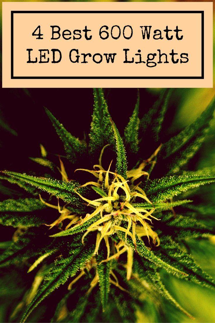 600 Watt Led Grow Light Top 4 Lights For Sale In 2019 640 x 480