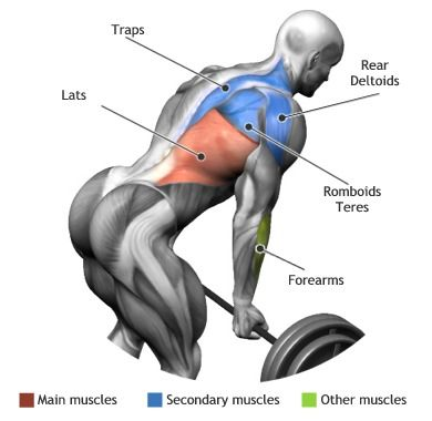 LATS BENT OVER BARBELL ROW Fitness Pinterest