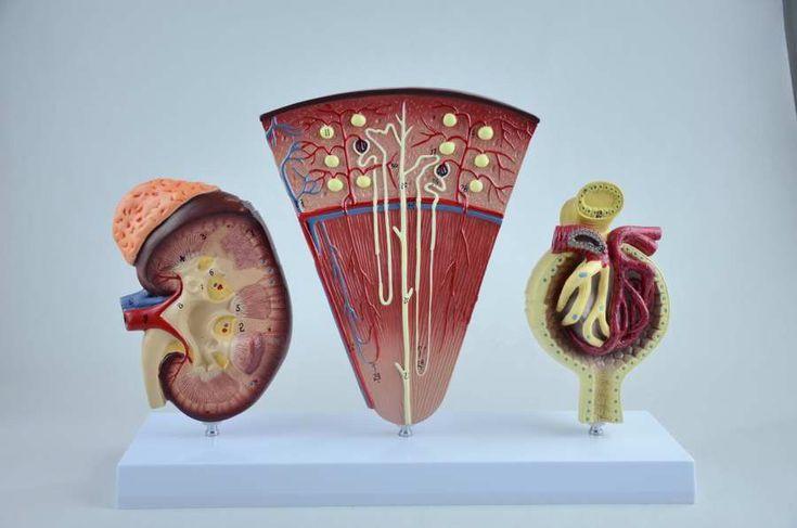 Síndrome nefrótico refere-se a um conjunto de sintomas e alterações laboratoriais que ocorrem em associação decorrentes da presença de uma doença renal.