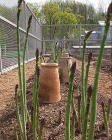80 best Garden Martha Stewart images on Pinterest Martha
