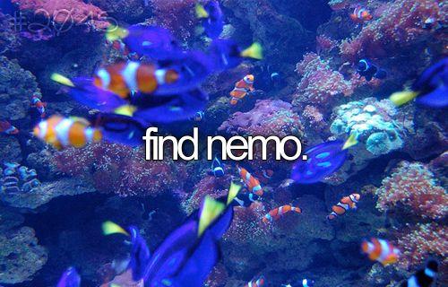 Nemo . . .: Perfect Buckets, Keep Swim, Findingnemo, Buckets List3, Aquarium, Scubas Diving, Challenges Accepted, Buckets Lists 3, Finding Nemo