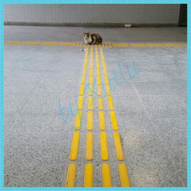Kediler mucize yaratıklar  bir kedi metro istasyonunda tam o noktaya niye yatar.  Simetri takıntısı mı var! ? Daha güzel poz vereceğini mi düşünüyor!? Benim gibi birisi fotoğrafını çeksin diye mi?  Yeniden dünyaya kedi olarak gelmiş bir insan ve bizim dikkatimizi mi çekmek istiyor!?Anlayan anlatsın! ?    Fotoğrafın Çekildiği yer: Karşıyaka Şemikler Metro İstasyonu  #kedi