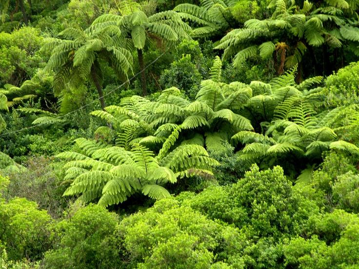 The beautiful fauna of New Zealand, north island.