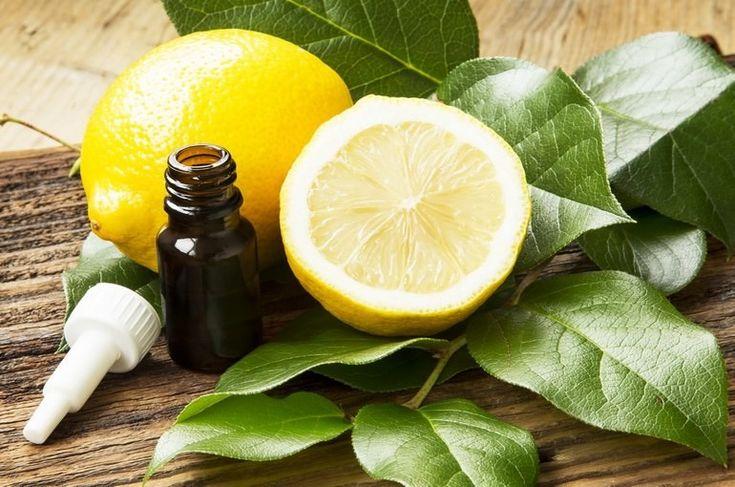 Эфирное масло лимона: свойства и применение, состав.  Полезные свойства эфирного масла лимона и его применение для лечения заболеваний и в бытовых целях. Состав эфирного масла лимона и его безопасность.