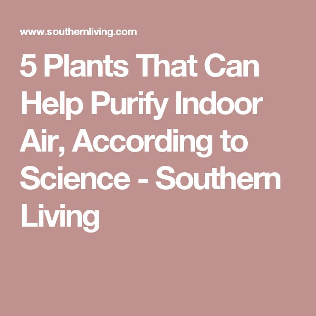 5 Plants That Can Help Purify Indoor Air, According to Science - Southern Living