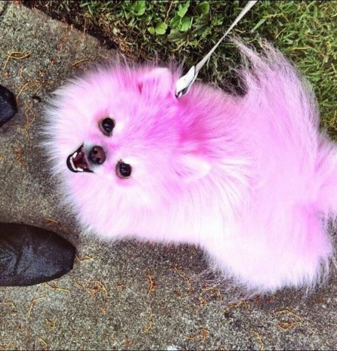 Jeffree Stars Dogs Names