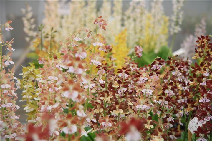 Colourful garden with Calanthe. My Garden Orchid favourite ©Anthura #garden