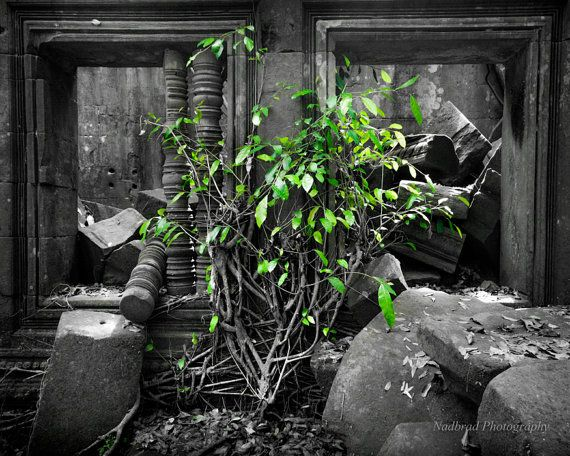 Black and white Green temples and trees fine art by NadbradDesigns