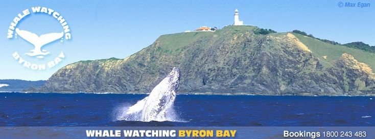 Byron Bay Whale Watching   » Whale Tours