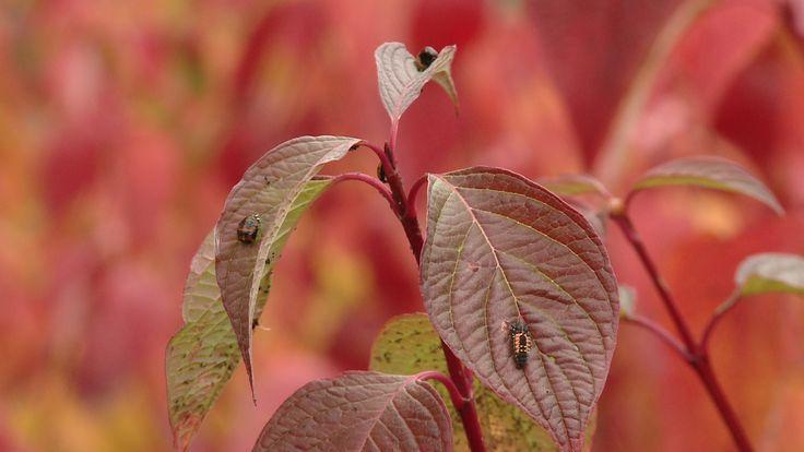 already autumn :D