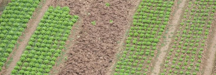 Scientists at the University of Sheffield have learned that farming with crushed silicate rocks mixed into the soil could improve global food security, increase crop yields, promote soil health, and reduce greenhouse gas emissions.