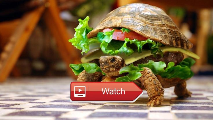 🐬 Top Funny Turtle Tortoise Videos Compilation Cute Animals 🐧 Turtles are very funny and cute animals Funny turtle videos for kids and for…